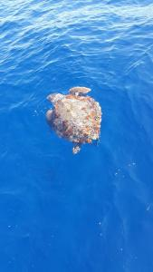 Rejsy - Morze Śródziemne - archipelag Ponza