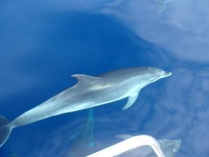 Delfinowe safari
